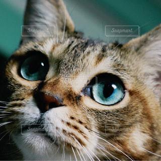 猫の写真・画像素材[214367]