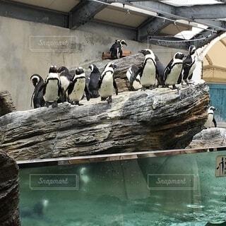 水族館のペンギンの写真・画像素材[4771239]