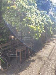 木漏れ日の写真・画像素材[4786047]