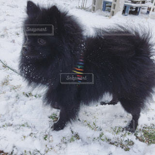 初雪の写真・画像素材[4795055]