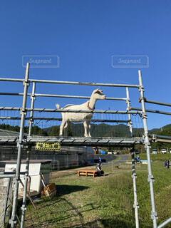 谷に架かる橋を渡る山羊の写真・画像素材[4766994]