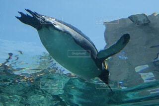 水槽を泳ぐペンギンの写真・画像素材[4767495]
