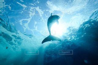 イルカの写真・画像素材[4768152]