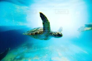 ウミガメの写真・画像素材[4768166]