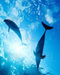 イルカの写真・画像素材[4768181]
