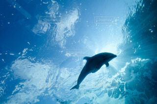 イルカの写真・画像素材[4768207]