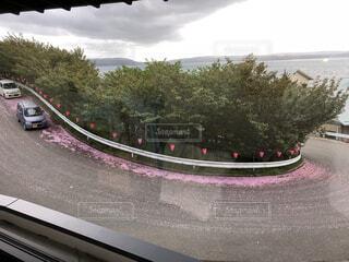 桜の花道の写真・画像素材[4770909]