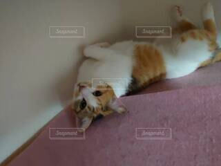 ごろごろする猫の写真・画像素材[4773030]