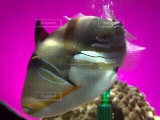 魚のクローズアップの写真・画像素材[4887386]