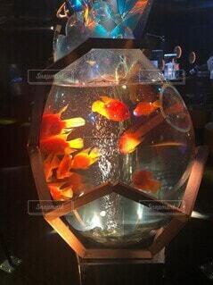 光と影 魚の写真・画像素材[4887388]