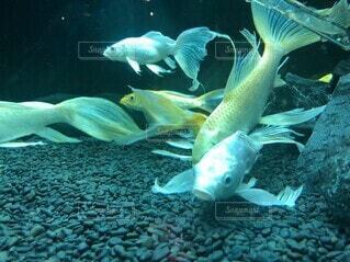 優雅な魚の写真・画像素材[4887390]