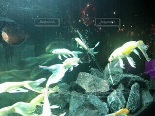 優雅な魚の写真・画像素材[4887391]