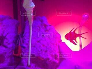 光と影 魚の写真・画像素材[4887400]