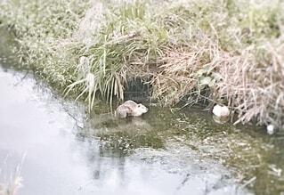 朝一の川での写真・画像素材[4768012]