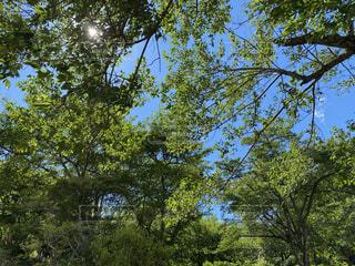 晴天の木漏れ日の写真・画像素材[4768378]
