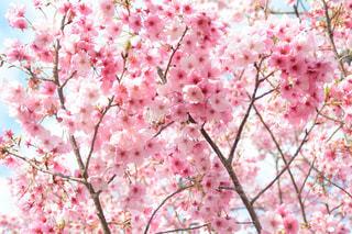 花の写真・画像素材[213722]