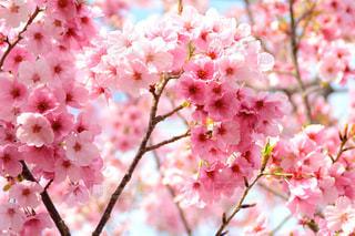花の写真・画像素材[213724]