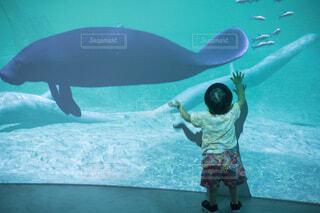 水族館でデジタルアートを楽しむ小さな男の子の写真・画像素材[4797185]
