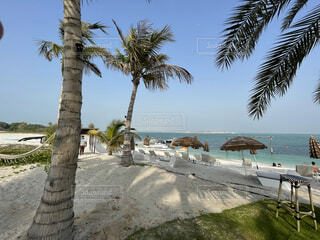 ヤシの木のあるビーチの写真・画像素材[4768515]
