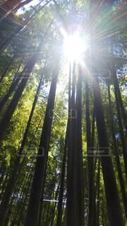 竹林の陽光の写真・画像素材[4768469]