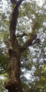 ハートの木の写真・画像素材[4768497]