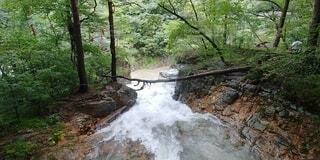 森の中の大きな滝の写真・画像素材[4768518]