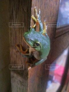 カエルの写真・画像素材[4768584]