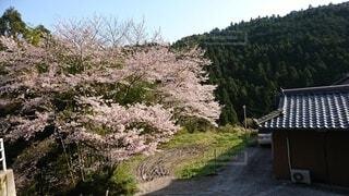 春の我が家の写真・画像素材[4768663]