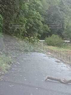 台風で倒木の写真・画像素材[4919669]
