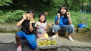 梅の収穫の写真・画像素材[4919677]