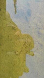 ホウネンエビの写真・画像素材[4768656]