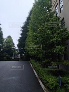 朝の散歩の写真・画像素材[4771391]