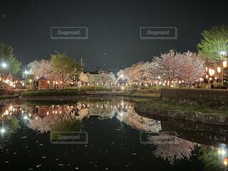 池に映る夜桜の写真・画像素材[4768863]