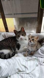 出窓の猫と子猫の写真・画像素材[4769085]