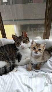 猫の写真・画像素材[4769084]