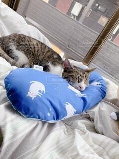 ベッドに横たわる猫の写真・画像素材[4769090]