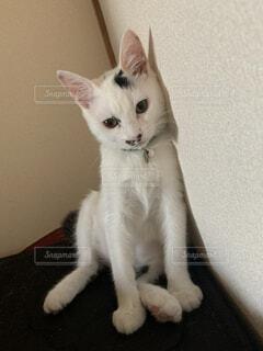 壁にもたれ掛かる猫の写真・画像素材[4769097]