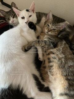 猫集合の写真・画像素材[4769098]