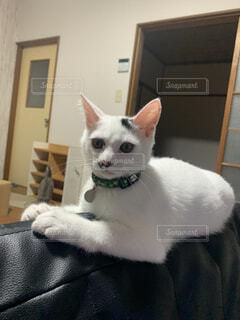 テーブルの上に座っている猫の写真・画像素材[4769101]