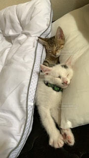 子猫の写真・画像素材[4769109]