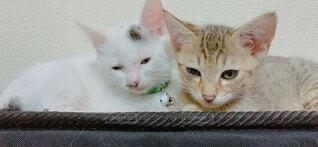 子猫の写真・画像素材[4769119]
