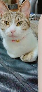 猫の写真・画像素材[4769116]