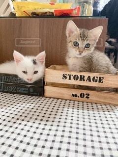 箱入り猫の写真・画像素材[4769114]