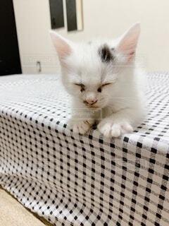 テーブルの上に座っている猫の写真・画像素材[4769124]