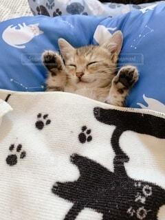 お昼寝子猫の写真・画像素材[4769126]