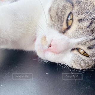 寝る間際の猫の写真・画像素材[4769156]