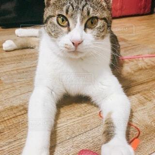 遊び疲れた猫の写真・画像素材[4769152]