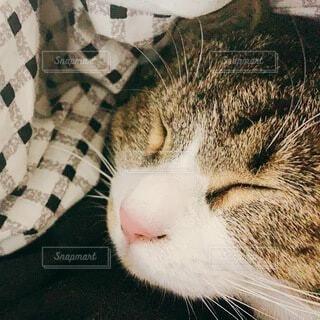 おやすみ猫の写真・画像素材[4769151]