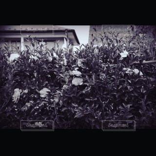 アンティーク花の写真・画像素材[4769163]