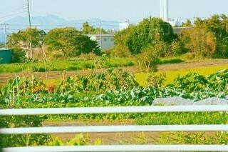 畑の写真・画像素材[4769187]